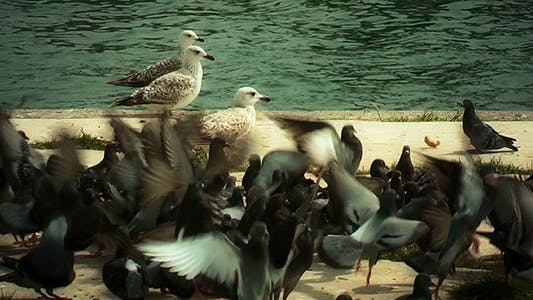Seagulls and Piegons Near the Sea