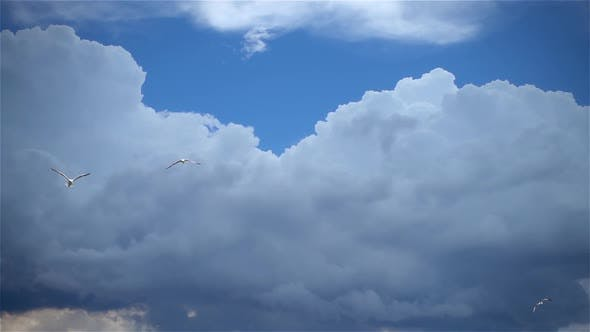 Seagulls Flying In Cloudy Sky