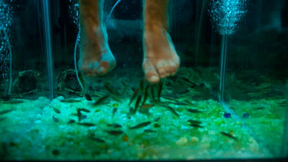 Thumbnail for Feet Peeling With Garra Rufa Fish