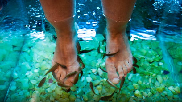 Thumbnail for Feet Spa Treatment With Fish