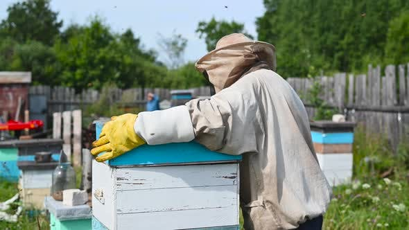 Beekeeper Is Working with Bees and Beehives on the Apiary.