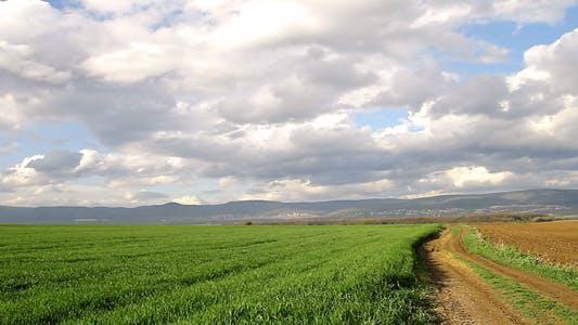 Dirt Road, Wheat Beautiful Sky