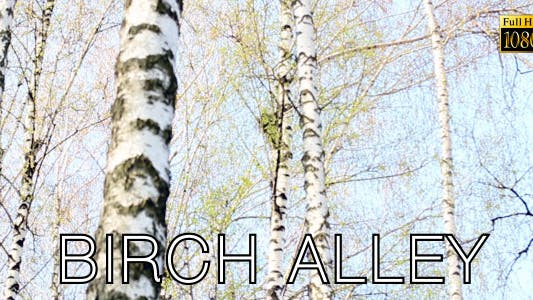 Thumbnail for Birch Alley