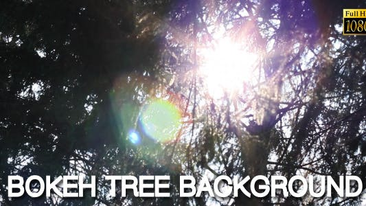 Cover Image for Bokeh Tree Background 10