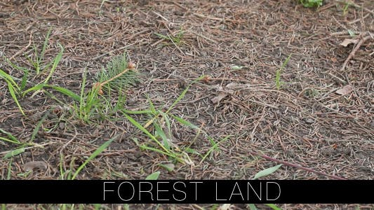 Thumbnail for Forest Land