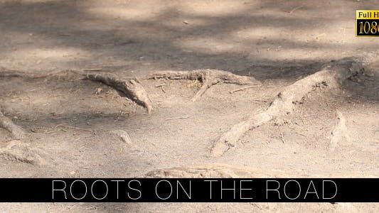 Thumbnail for Roots On The Road