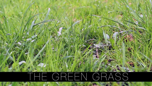 Thumbnail for The Green Grass