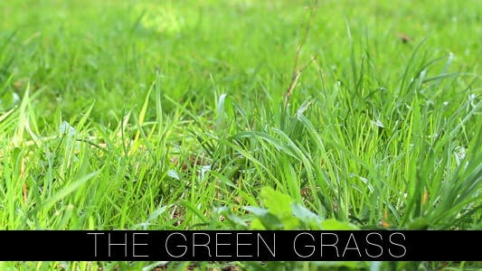 Thumbnail for The Green Grass 2