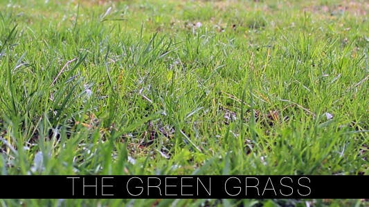 Cover Image for The Green Grass 3