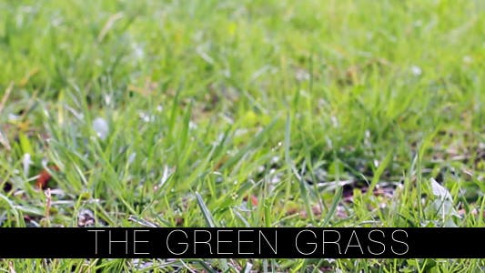 Thumbnail for The Green Grass 4