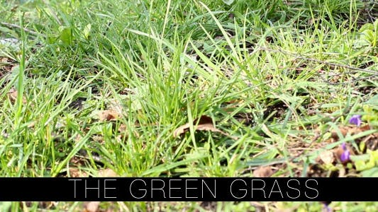 Cover Image for The Green Grass 5