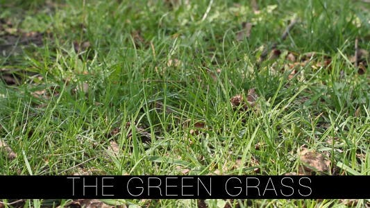 Thumbnail for The Green Grass 6