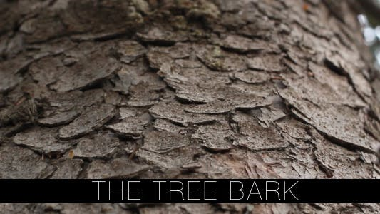 Cover Image for The Tree Bark
