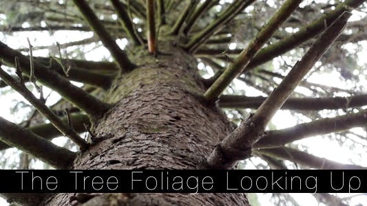 Thumbnail for The Tree Foliage Looking Up