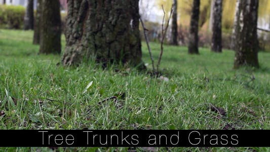Thumbnail for Tree Trunks and Grass 3
