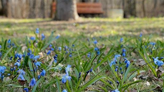 Thumbnail for Frühling Wildblumen