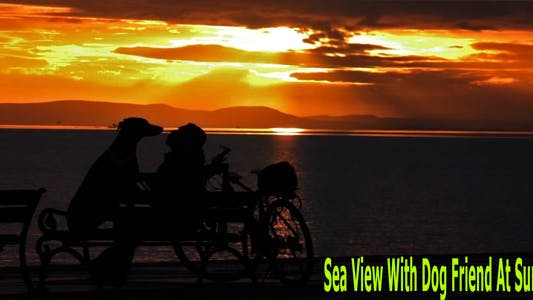 Thumbnail for Sea View With Dog Friend At Sunset
