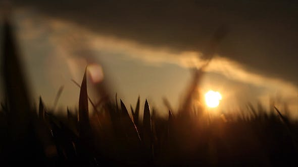 Thumbnail for Field in the Sunset 1