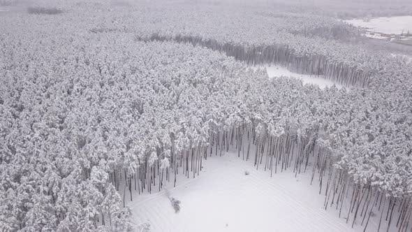 Thumbnail for Winter Landscape, Pine Trees Covered with Snow. Aerial View