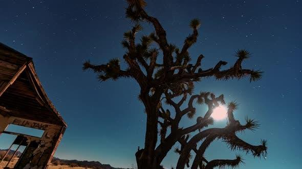 Thumbnail for Joshua tree at night