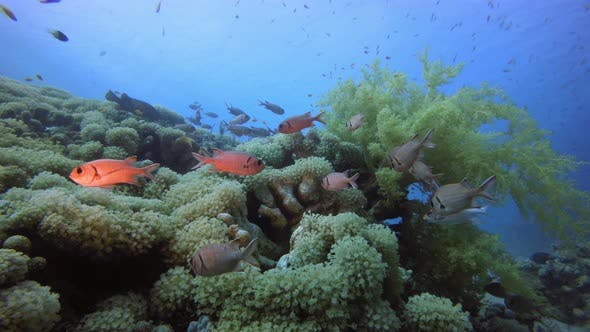 Thumbnail for Underwater Tropical Colorful Reef
