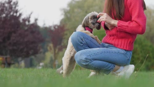 Woman Asks Shih Tzu Dog to Do Trick Showing Snack on Meadow