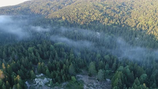 Thumbnail for Forest And Over The Clouds Aerial View