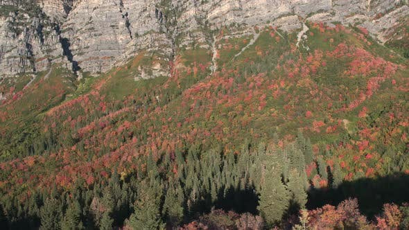 Thumbnail for Aerial view of colorful foliage amongst pine trees