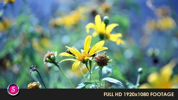 Thumbnail for Flower 5