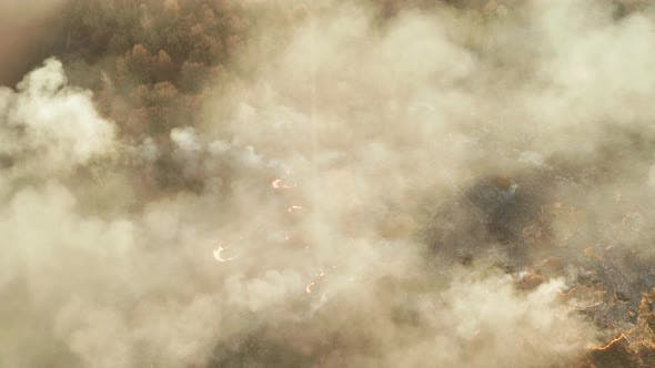 Thumbnail for Aerial View of Wildfire in Forest. Burning Forest and Huge Clouds of Smoke.