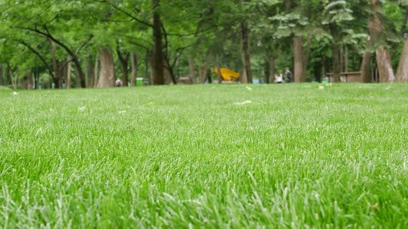 Thumbnail for Fresh Cut Spring Green Grass in Park