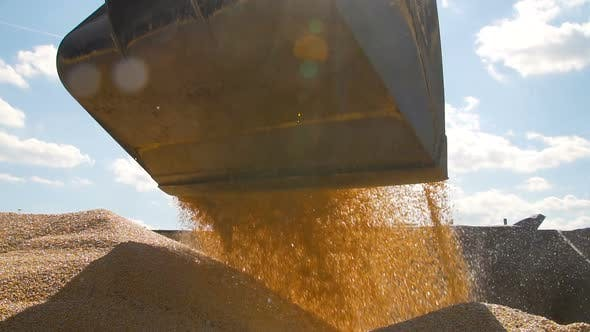 Thumbnail for Tracktor Pouring Harvested Corn Grain in a Pile