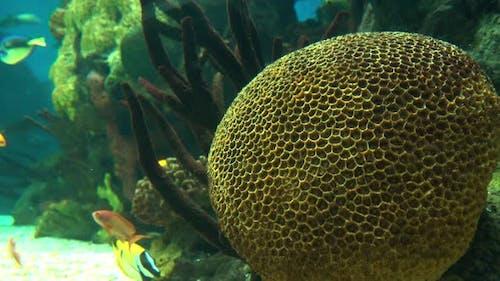 Fishes Oceanarium