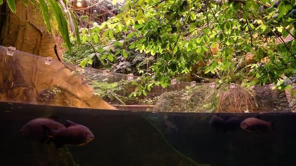 Thumbnail for Nature Fish