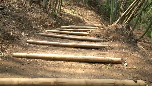Thumbnail for Walking On Path In Forest