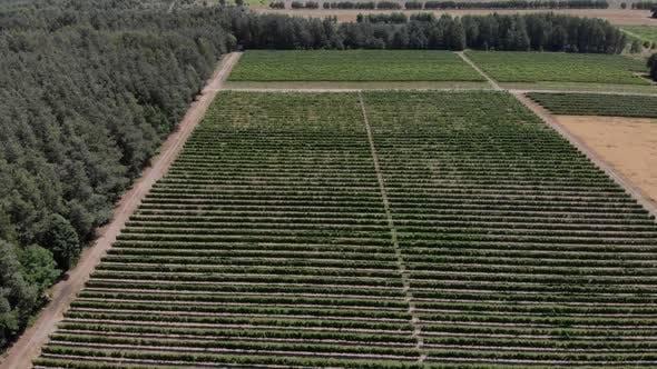 Amazing Vineyards Landscape
