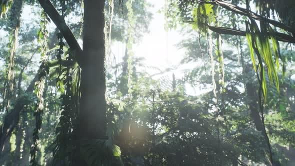 Thumbnail for Misty Jungle Rainforest in Fog