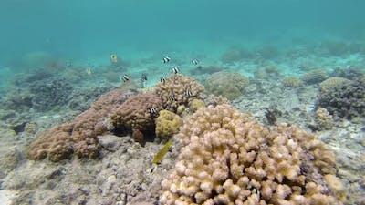 Snorkelling at Rarotonga
