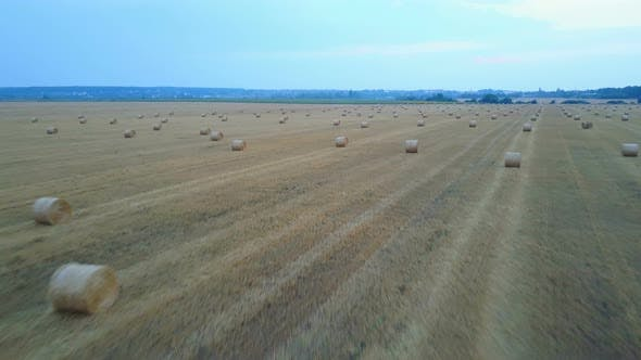 Thumbnail for Farm Field With Hay Bales