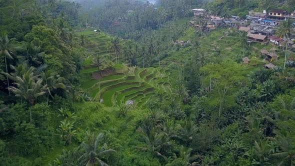 Aerial View Above of Bali Landscapes with Terraces Rice Field.