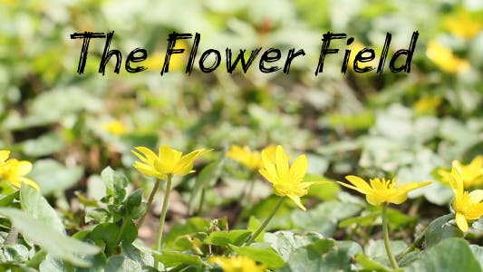 Thumbnail for The Flower Field 5