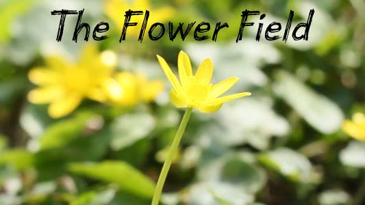 Thumbnail for The Flower Field 6