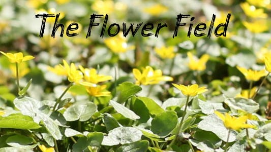 Thumbnail for The Flower Field 7