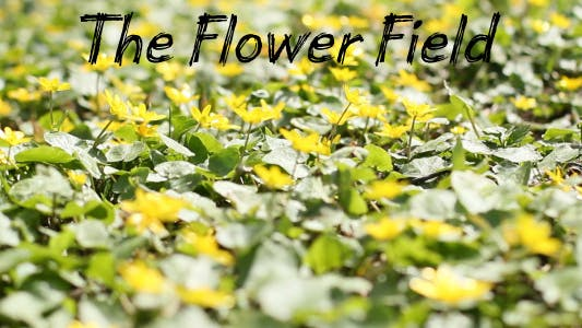 Thumbnail for The Flower Field 8