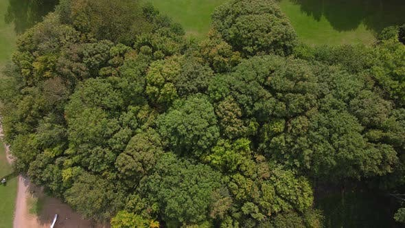 A Top Down shot of a Small Wooded Area