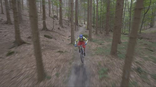 Fast Bike In The Forest