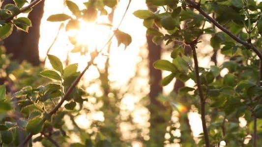 Thumbnail for Shrubs Among The Trees 1