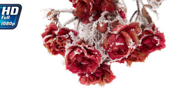 Thumbnail for Roses in Hoarfrost