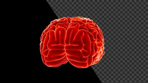 Human Brain Seamlessly Rotated With Alpha V2