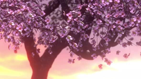 Thumbnail for Cherry Bloossom Sunset